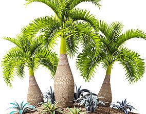 Palm collection 10 3D