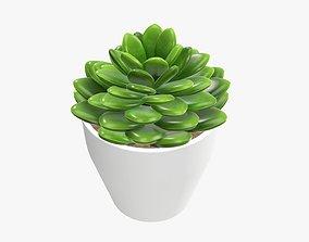 Cactus composition artificial 02 3D model