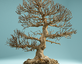 RAW SCAN Dead Bonsai Tree High Poly 01 3D model