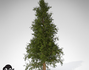 XfrogPlants Western Red Cedar 3D model