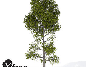 3D model XfrogPlants Pyrenean Oak