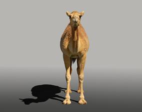 Camel Fur 3D model blender