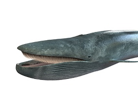 Blue Whale Rigged 3D asset