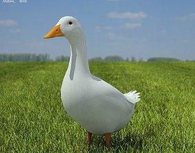 Pekin Duck Anas platyrhynchos domestica 3D asset