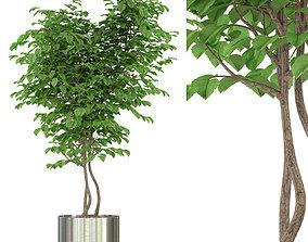 3D model Plants collection 244