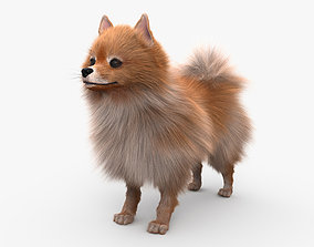 3D Pomeranian HD