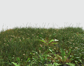 Ryegrass Meadow Patch 3D