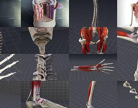 Skeletal System with Bone Anatomy 3D