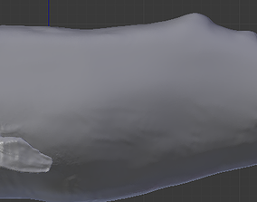 3D model Sperm Whale Cachalote