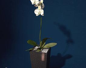 XfrogPlants Orchid 3D model