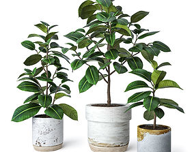 Ficus Elastica 2 3D model tree