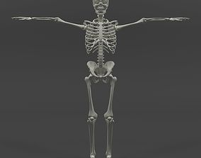 3D asset rigged Human Skeleton