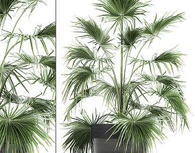 3D Decorative palm in a flowerpot 712
