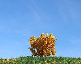 Leafy Tree In Autumn 3D