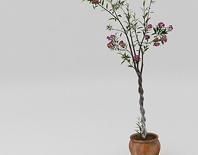 3D Exterior plant with vase