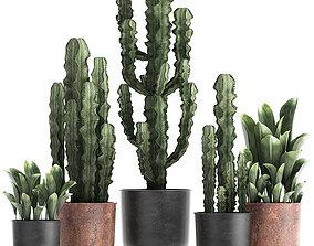 3D model Decorative plants in flowerpots 839