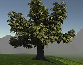 3D asset Gameready models old oak