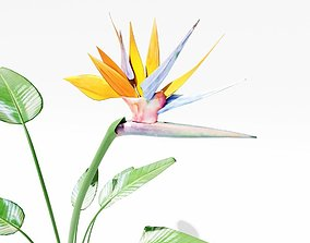 realtime Bird of Paradise 3D Model