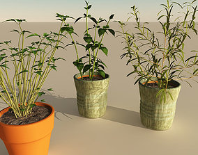 3D model Kitchen Herb Collection Volume 1