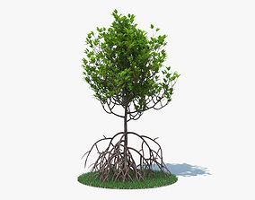 Mangrove 3D