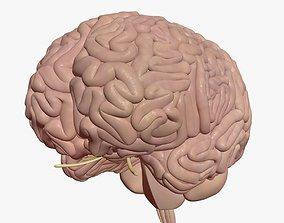 Human Brain system 3D