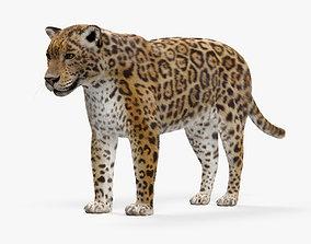 3D model Jaguar HD
