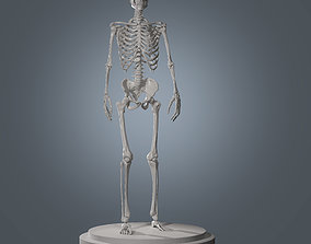 Human Skeleton Base Mesh 3D model