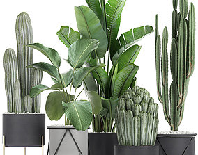 3D Collection of decorative cactus in black flowerpots 747