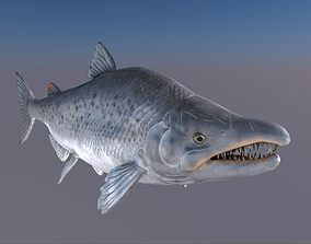 3D Salmon Model With A Rig