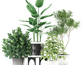 3D Plants collection 118