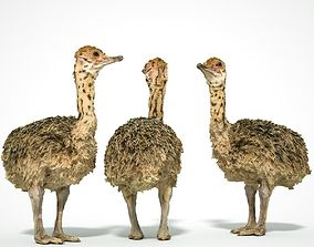 realtime Tiny Ostrich 3D scanned