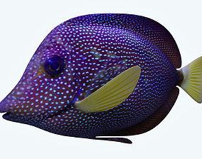 Zebrasoma Fish 5 3D