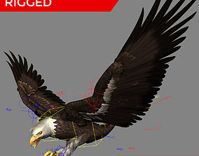 rigged 3D Bald Eagle Professionally Rigged Textured 1