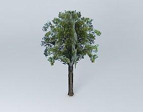 3D model Fraxinus excelsior ash