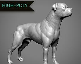 3D print model Rottweiler High-Poly