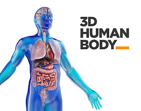 3D Human Male anatomy model with internal organs with 4K