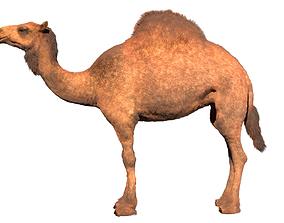 Camel Fur Rigged 3D asset