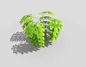Plant 3D asset game-ready decoration