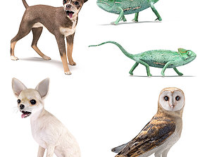 Pets Set 3D model