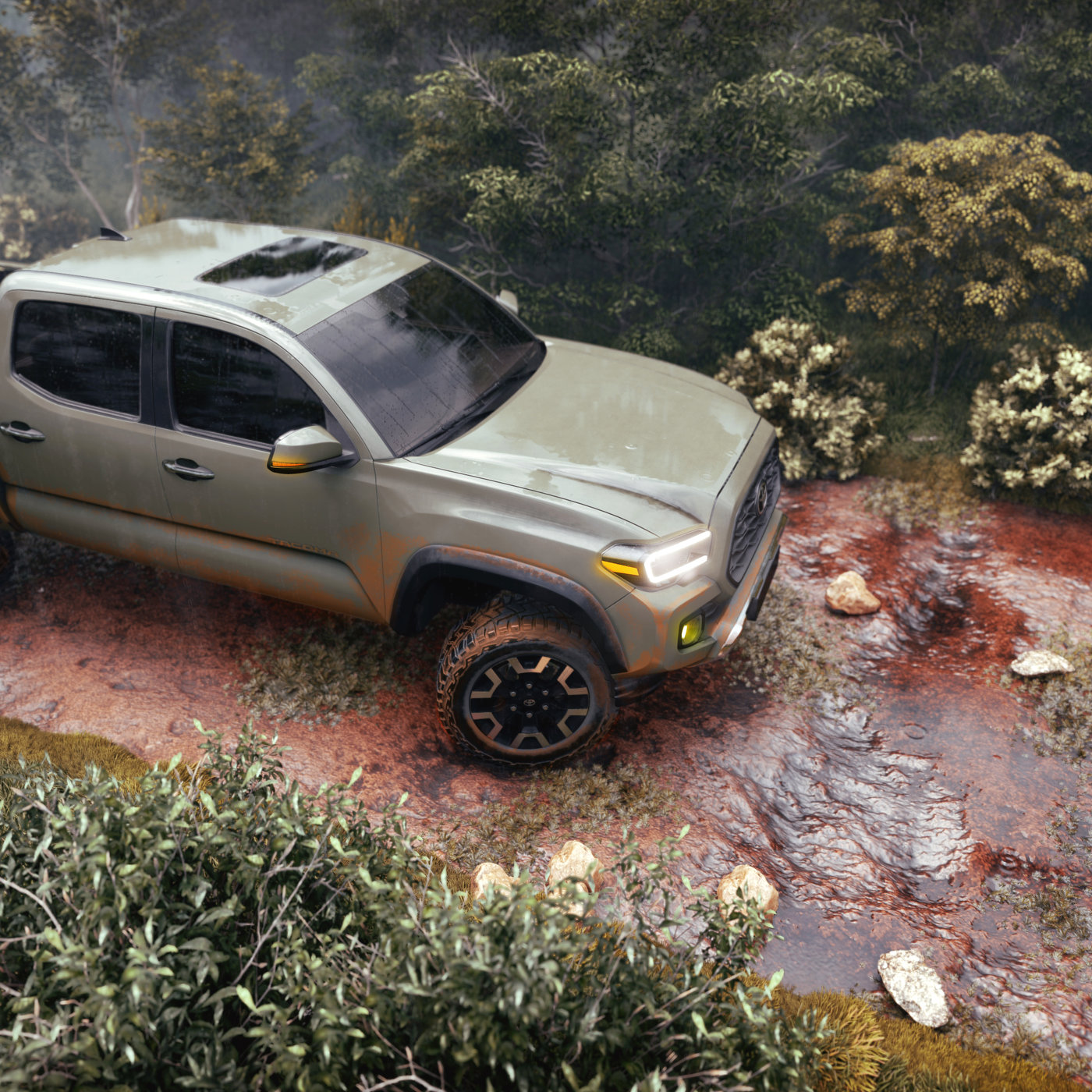 Tacoma In The Wild