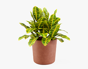 Croton plant 3D model