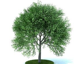 Fully Leafed Green Artificial Tree 3D model