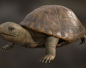 Turtle for CG 3D