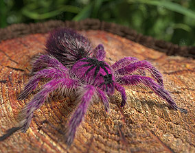 Tarantula Brazilian Pinkbloom 3D asset