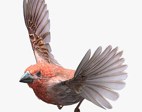 3D asset House finch - rigged - animated - Standard PBR