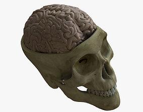 3D Human Skull with Brain