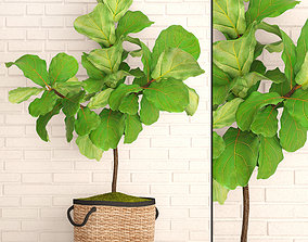 leaf 3D Ficus Lyrata Trees
