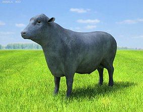 3D model Angus Bull Bos taurus