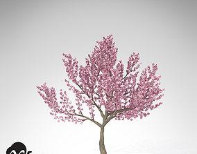 3D model XfrogPlants Kanzan Cherry