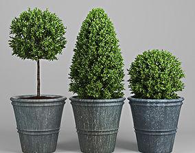 Plant Three 3D model